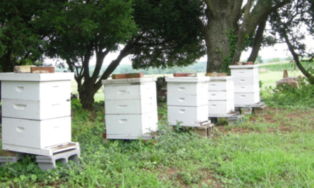 Beehive Distribution Program Provides Hives to Beekeepers