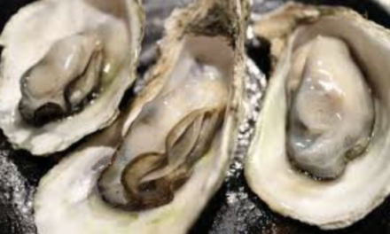 Oyster Aquaculture Work Group to Develop Sustainable Growth