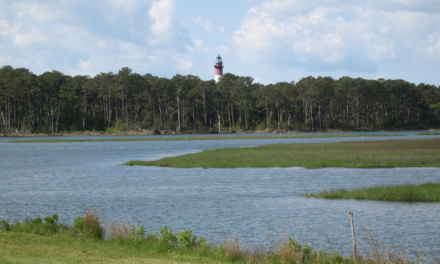 Chincoteague Chamber of Commerce announces Photo Contest for 2021 Chincoteague National Wildlife Refuge Annual Pass