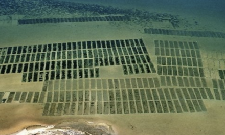 Oyster Growers Can Apply for $260K Funding Through RCPP