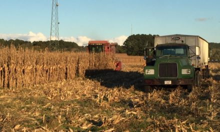 November Crop Report Shows Mixed Results