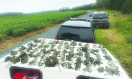 Accomack County Man Pleads Guilty to Exceeding the Daily Limit of Clapper Rail