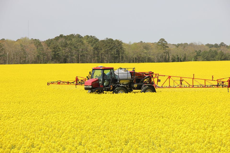 Virginia farmers to plant more corn and cotton, less soybeans and wheat