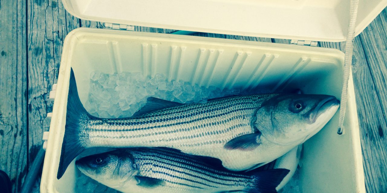 Concerns about rockfish population could scuttle spring season