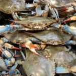 Pandemic prompts crab season extension