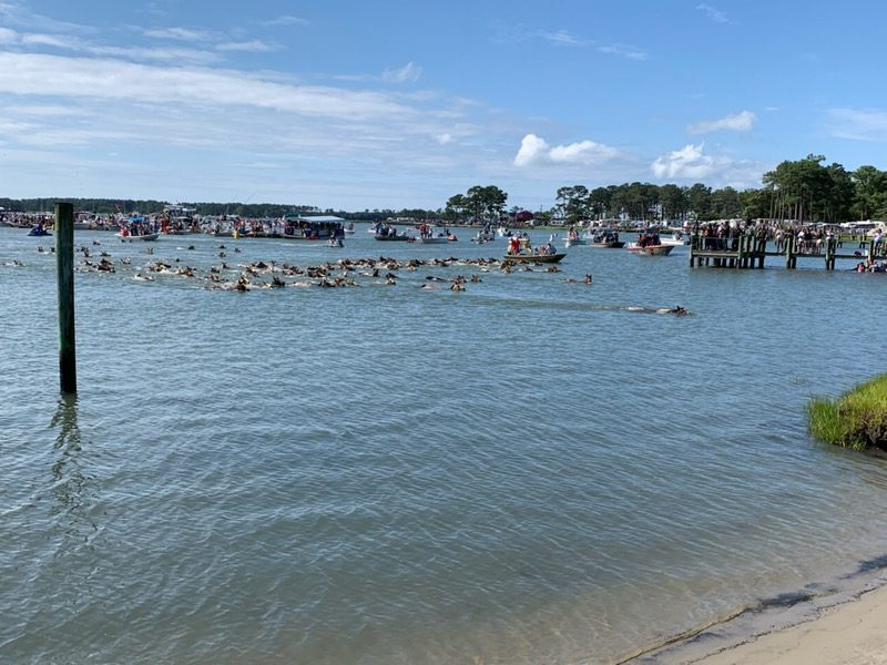 94th Annual Chincoteague Pony Swim goes off without a hitch
