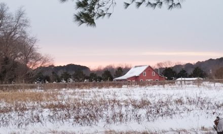 No increase in Va. farm bankruptcy rates in spite of a 20% nationwide increase