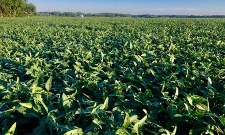 Corn acreage down slightly, soybeans up from 2019