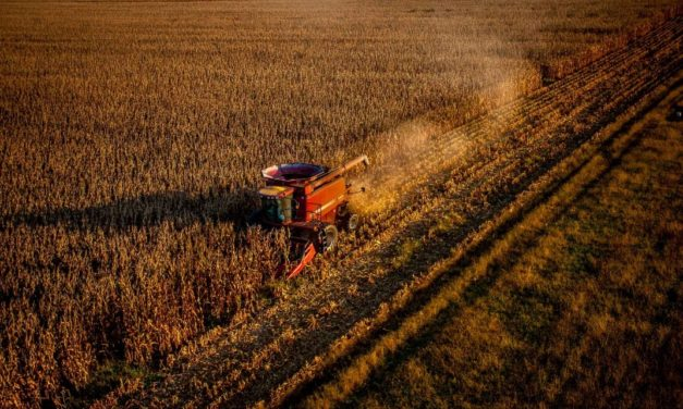 Corn, Soybeans, Cotton production up in Virginia
