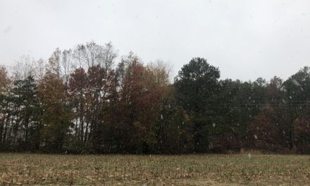 Northam approves grant to DGIF to fund Eastern Shore Forest Conservation Initiative