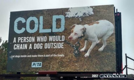PETA places anti-chaining billboard on the Shore