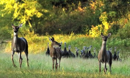 Deer and turkey harvest data released