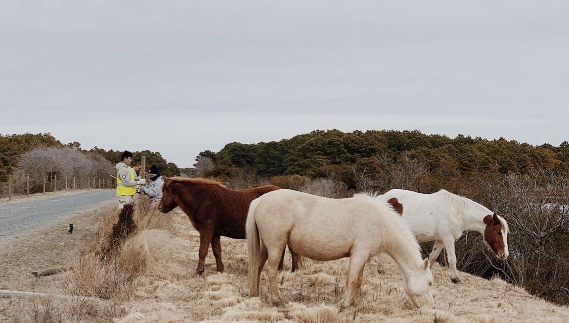 CNWR to close partially April 17 and 18 for spring pony health check