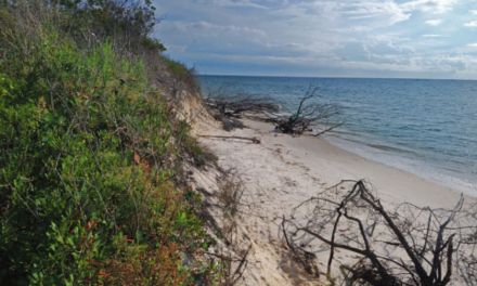 Cape Charles Natural Area Preserve to close for repairs due to trespass and unauthorized use