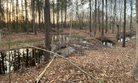 Northampton County to study drainage issues