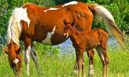 Three month old orphaned foal relocated